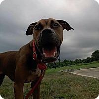 Adopt A Pet :: Courage - Burlington, NJ