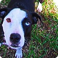 Adopt A Pet :: Carly - Von Ormy, TX