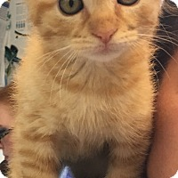 Adopt A Pet :: Noodle - McDonough, GA