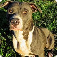 Adopt A Pet :: Leandra - West Babylon, NY