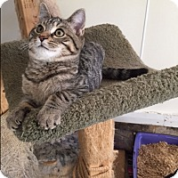 Adopt A Pet :: George - Ashland, OH