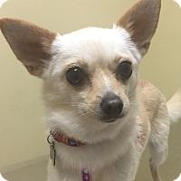 Adopt A Pet :: Tina - San Leandro, CA