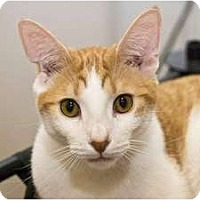 Adopt A Pet :: Tino - New Port Richey, FL