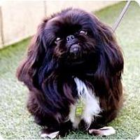 Adopt A Pet :: Arthur - Mission Viejo, CA