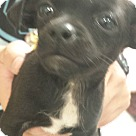 Adopt A Pet :: Number Four