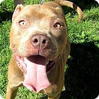 Adopt A Pet :: Adam - Lubbock, TX