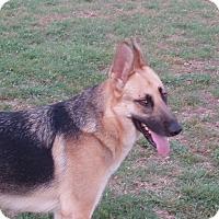 Adopt A Pet :: Kelbie - Dripping Springs, TX