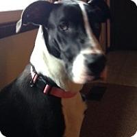Adopt A Pet :: Lucy - O'Fallon, MO