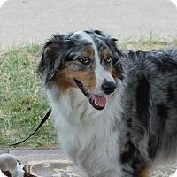 Adopt A Pet :: Trix - Minneapolis, MN