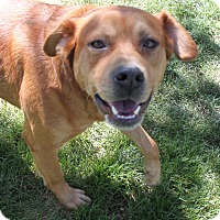 Adopt A Pet :: Scout - Sweetie Pie - Bend, OR