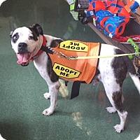 Adopt A Pet :: Cocoa (courtesy Kym) - Homestead, FL
