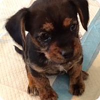 Adopt A Pet :: Meg and Moon - Rancho Cucamonga, CA