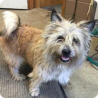Adopt A Pet :: # 4 STRAY Avail.2/5 - Carrollton, OH