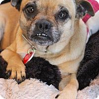 Adopt A Pet :: ChaCha Chug - Los Angeles, CA