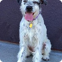 Adopt A Pet :: Cassie - Fremont, CA
