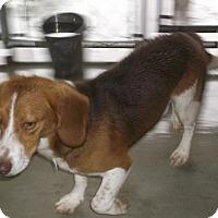 Adopt A Pet :: Jethro - Bonifay, FL
