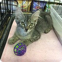 Adopt A Pet :: London - Gilbert, AZ