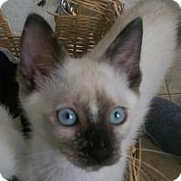 Adopt A Pet :: Sushi - Royal Palm Beach, FL