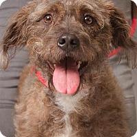 Adopt A Pet :: JAX - Pt. Richmond, CA