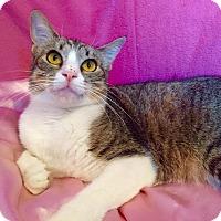 Adopt A Pet :: Kai - Cerritos, CA