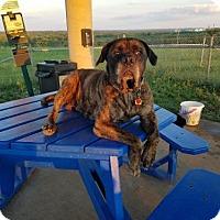 Adopt A Pet :: Lovely Lola!! - Chambersburg, PA