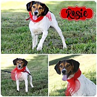 Adopt A Pet :: Rosie - Marion, KY