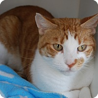 Adopt A Pet :: Dennis - Council Bluffs, IA
