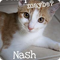Adopt A Pet :: Nash - Jacksonville, FL