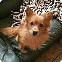Adopt A Pet :: Mandarin - conroe, TX
