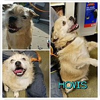 Adopt A Pet :: Hovis - Garden City, MI