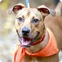 Adopt A Pet :: Dunston Freccerro - Kettering, OH