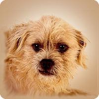 Adopt A Pet :: Roger - Prescott, AZ