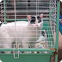 Adopt A Pet :: Franklin - Walnut, IA