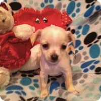 Adopt A Pet :: Baby Miley - Marlton, NJ