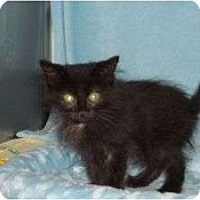 Adopt A Pet :: Ninja - McDonough, GA