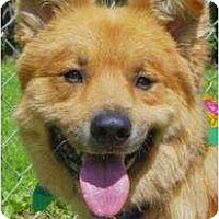 Adopt A Pet :: Fernando - Antioch, IL
