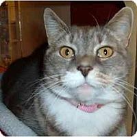 Adopt A Pet :: GRACIE - No.Charleston, SC
