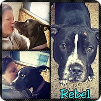 Adopt A Pet :: Rebel (courtesy) - South Park, PA