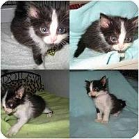 Adopt A Pet :: Zoey - AUSTIN, TX