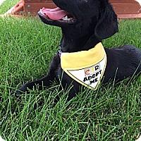 Adopt A Pet :: Penny - Oak Brook, IL