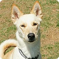Adopt A Pet :: Evie (located in TX) - Cranston, RI