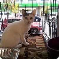Adopt A Pet :: Shannon - Brooklyn, NY