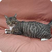 Adopt A Pet :: Lucy - Bentonville, AR
