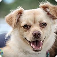 Adopt A Pet :: Tilly - Gainesville, FL
