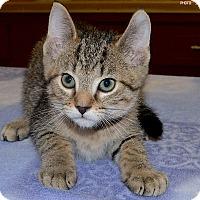 Adopt A Pet :: Pegasus - Medina, OH