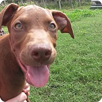 Adopt A Pet :: Erik - Leming, TX