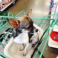 Adopt A Pet :: Scampy - Surrey, BC