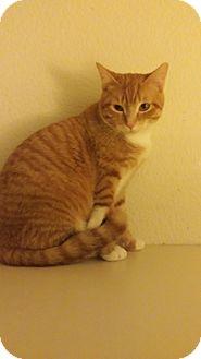 Mesa Az Cat Adoption