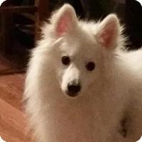 Adopt A Pet :: Koda - Saskatoon, SK
