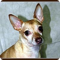 Adopt A Pet :: TIC TAC in Rogers, AR. - Little Rock, AR